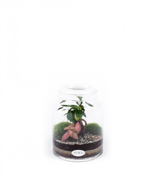 NIWA Design Pure Small Terrarium